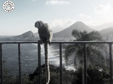 titel-riomagic-the-last-monkey-tour